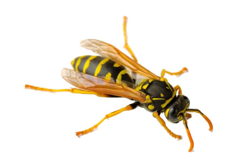 Wasp Control Wakefield